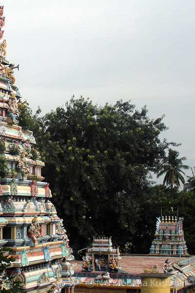 Panchesti-Agastheeswarar-Temple2