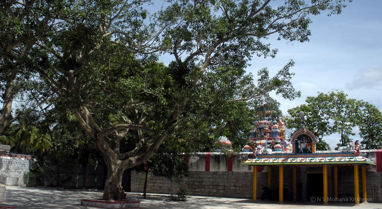 penneeswarar1