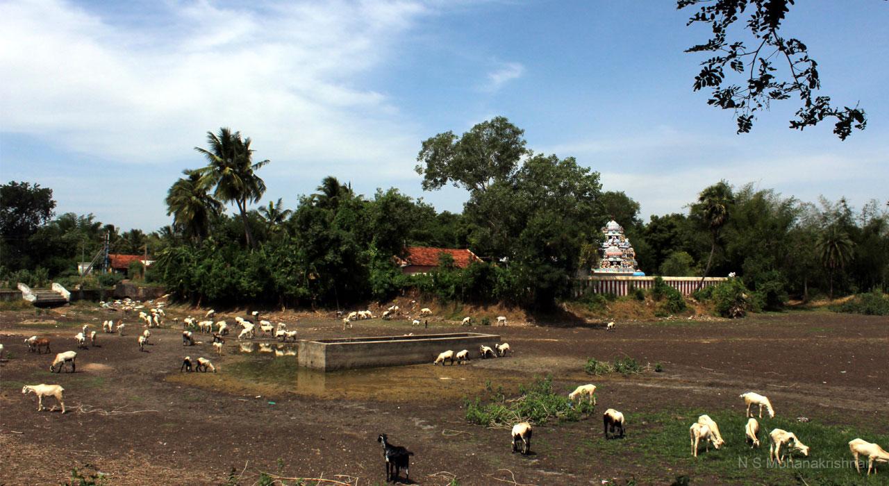 nirudee-pulavarnatham-1
