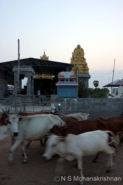 nideeswarar-vp-2
